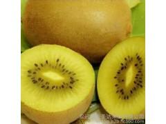 供应成都猕猴桃 安圣达金果猕猴桃 黄心猕猴桃 猕猴桃等水果