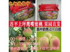 正宗广东河源市连平上坪鹰嘴蜜桃新鲜采摘水果